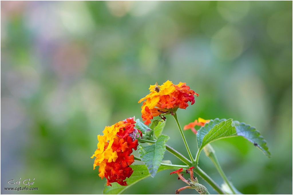 Quelques fleurs de fin d'été ... _dm_5112