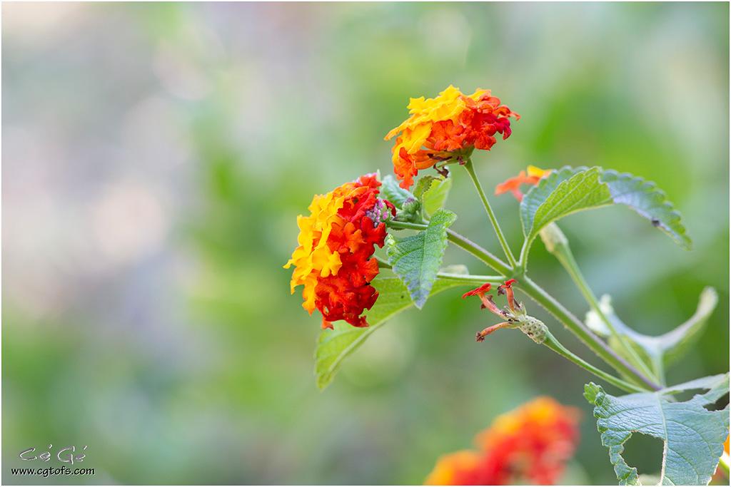 Quelques fleurs de fin d'été ... _dm_5113