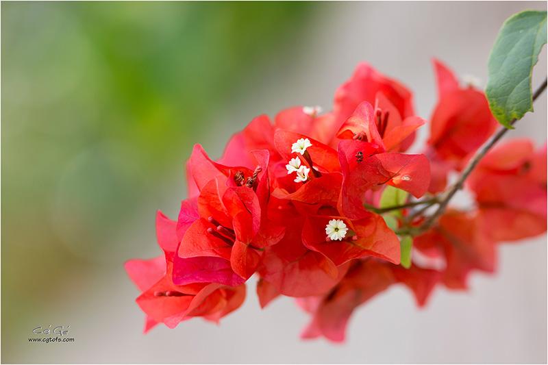 Des fleurs sous les tropiques ... W_dm_232
