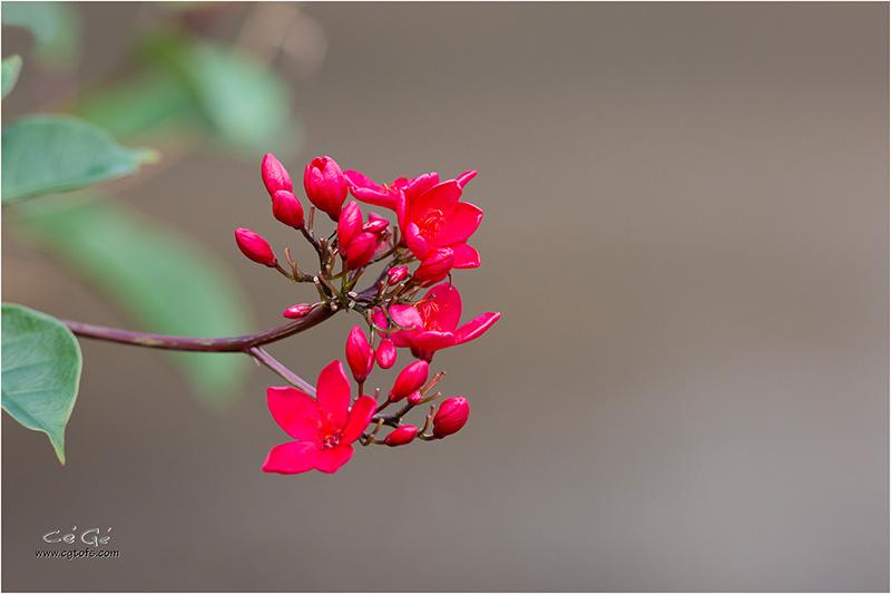 Des fleurs sous les tropiques ... W_dm_238