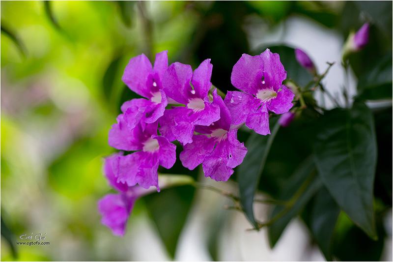 Des fleurs sous les tropiques ... W_dm_240
