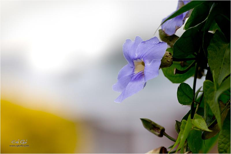 Des fleurs sous les tropiques ... W_dm_241