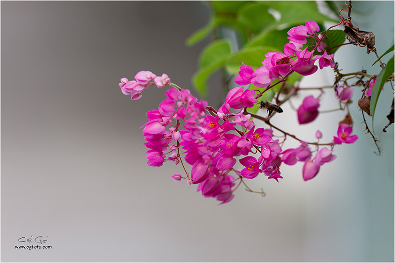 Des fleurs sous les tropiques ... W_dm_242