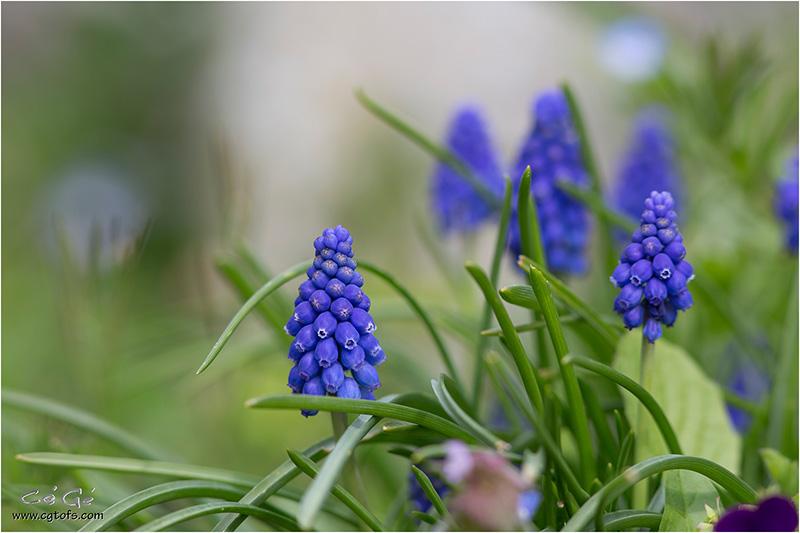 Le début du printemps ... W_dm_313