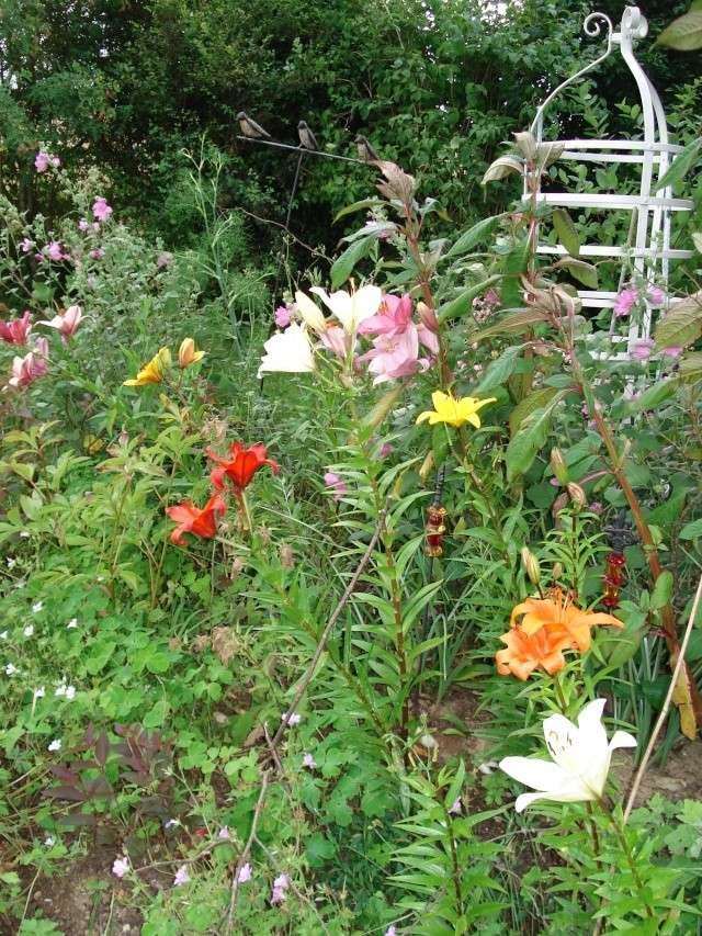 le jardin de Giroflee - Page 2 Jardin58