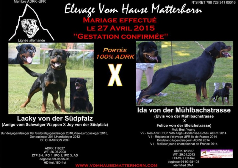 Rottweiler - Ida x Lacky Ida310