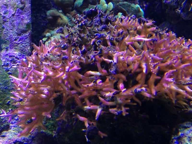 problème hystrix Corail10