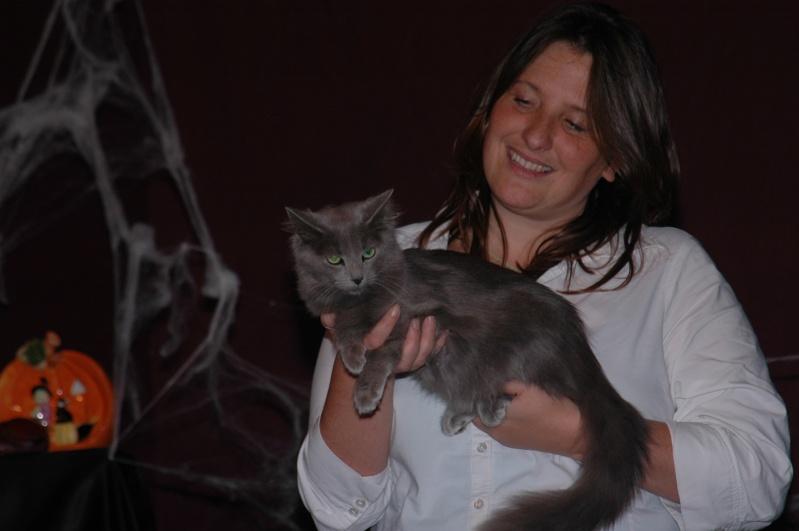 Cat show in Antwerpen Dsc_5811
