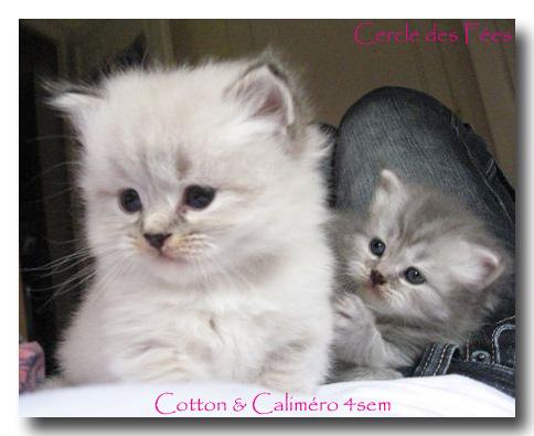 une histoire d'amour ... Cotton10