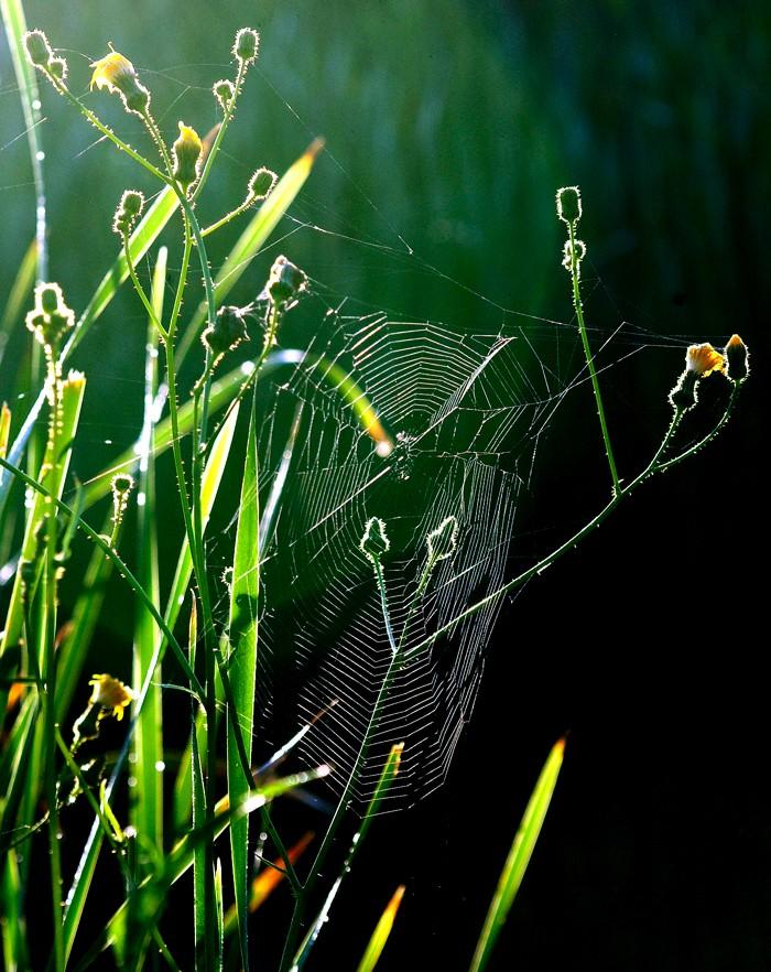 Le vie en image Spider10
