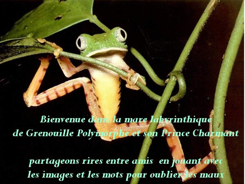 grenouille polymorphe