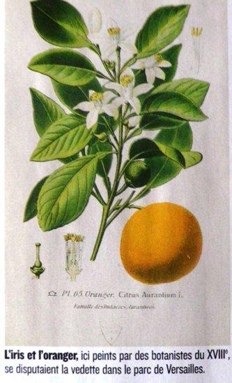 Herbier de Marie Antoinette Imgp0314