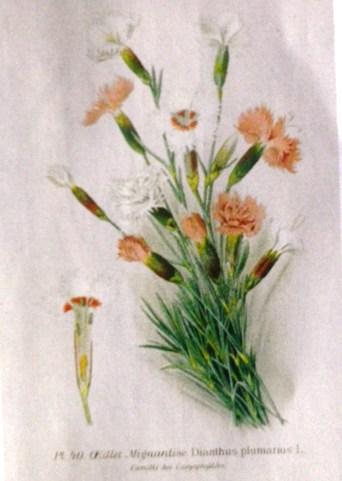 Herbier de Marie Antoinette Imgp0315