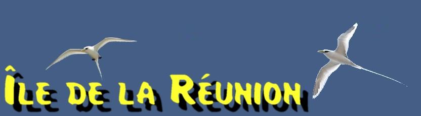 FORUM REUNION - FORUM 974