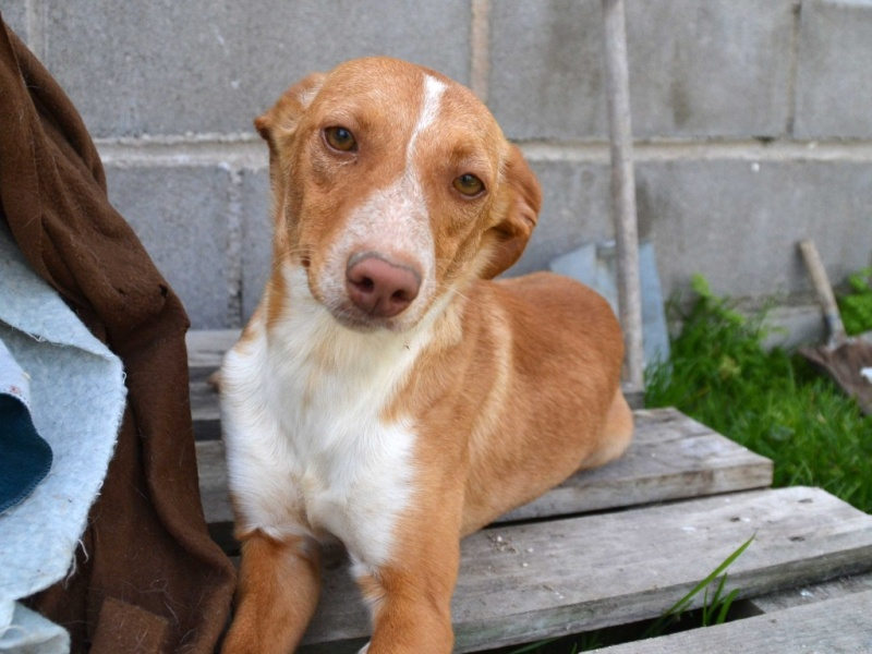 Lichi petite pod en urgence Adoptée Scooby France Litchi10
