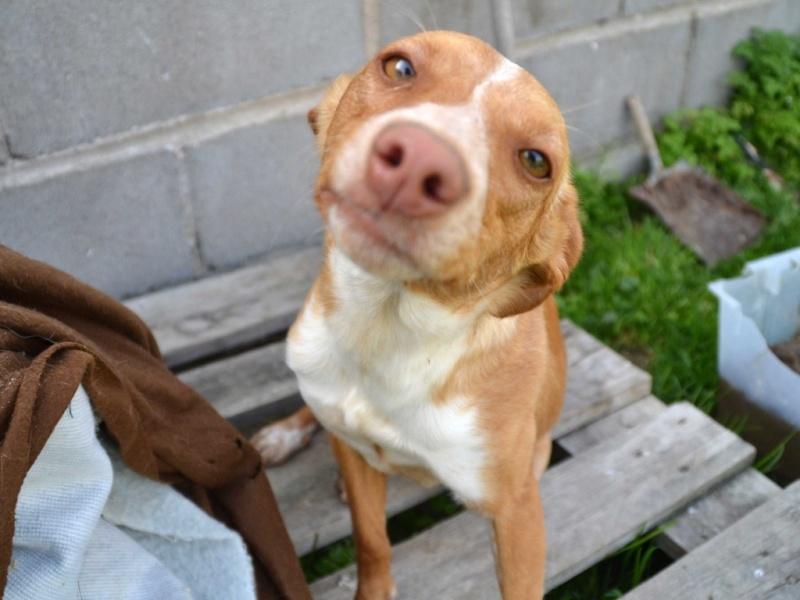 Lichi petite pod en urgence Adoptée Scooby France Litchi11