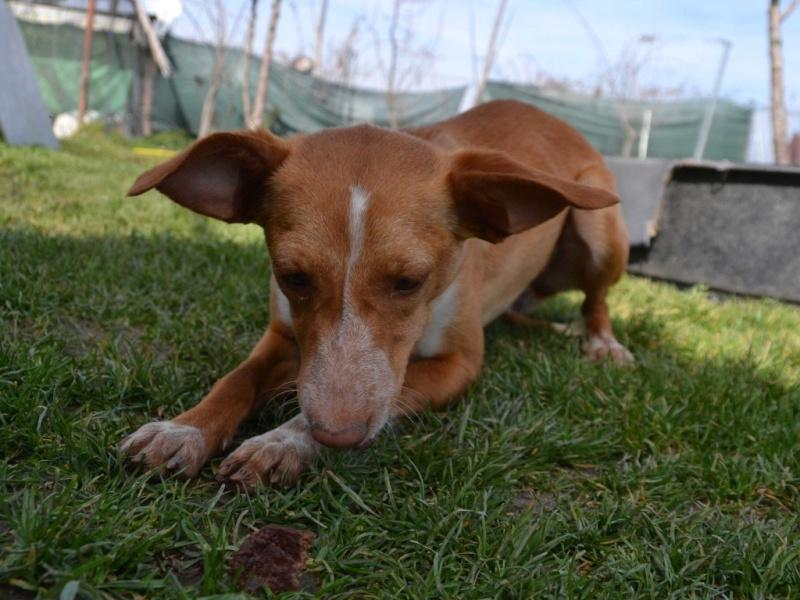 Lichi petite pod en urgence Adoptée Scooby France Litchi12