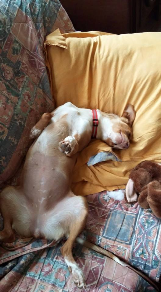 Lichi petite pod en urgence Adoptée Scooby France Litchi14
