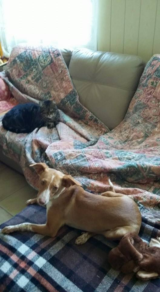 Lichi petite pod en urgence Adoptée Scooby France Litchi15