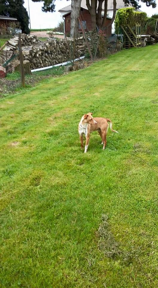 Lichi petite pod en urgence Adoptée Scooby France Litchi16