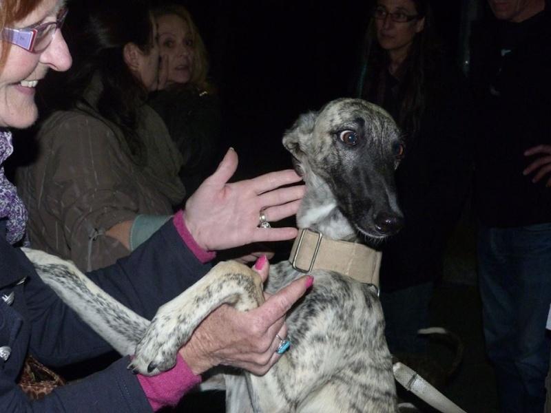 Sira, bringée claire au masque noir  Scooby France adoptée  Sira_a15