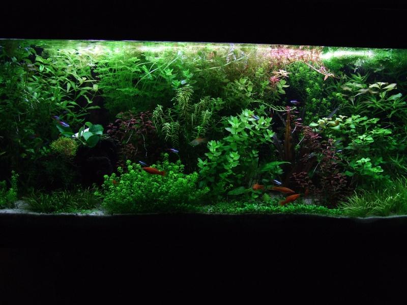 Le 240l de Joce54 :) Aqua_010