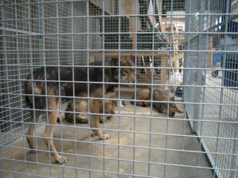 Mia et les loups... Photo_10