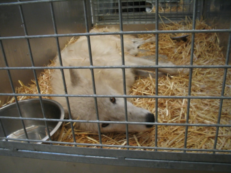 Mia et les loups... Photo_11