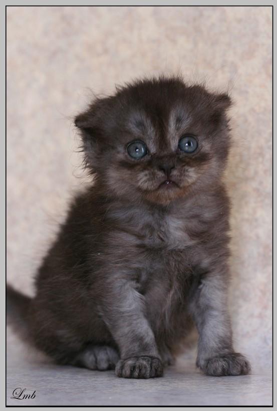 Mes chatons nés le 15 mai Cholai10