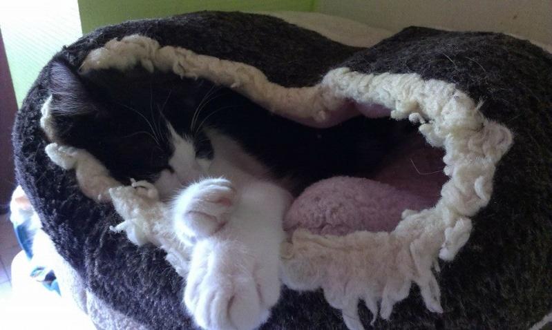 PEEPO, chat noir et blanc  Peepo11