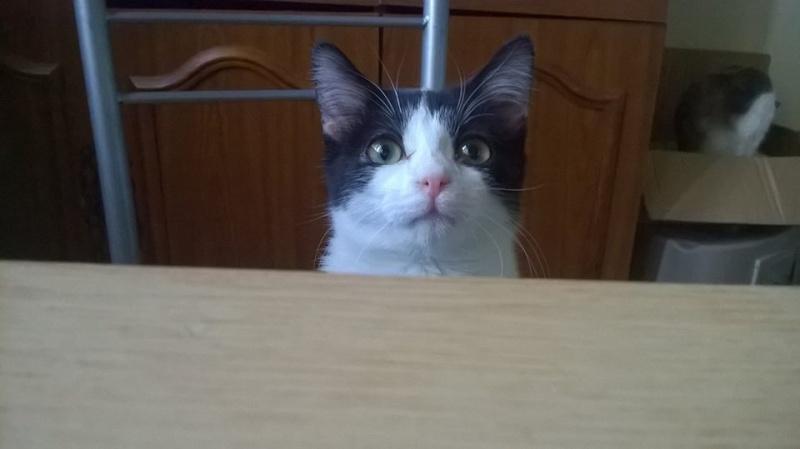 PEEPO, chat noir et blanc  Peepo_10
