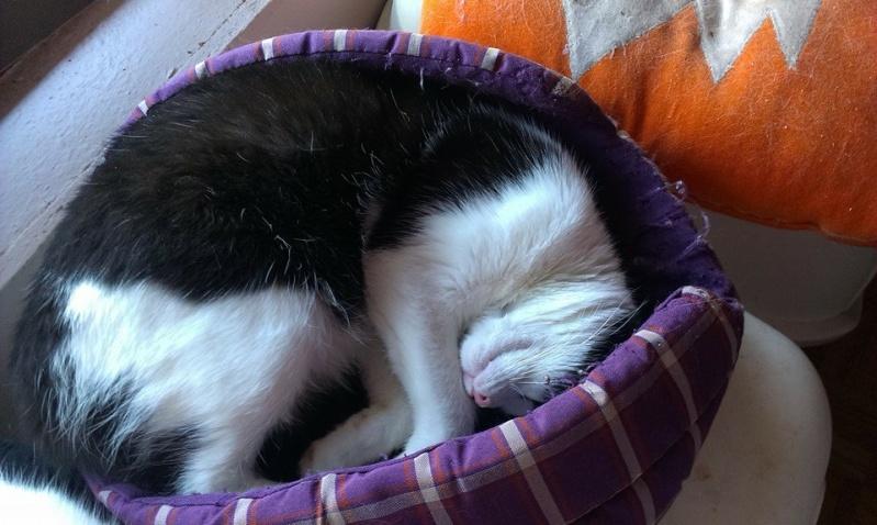 PEEPO, chat noir et blanc  Peepo_11