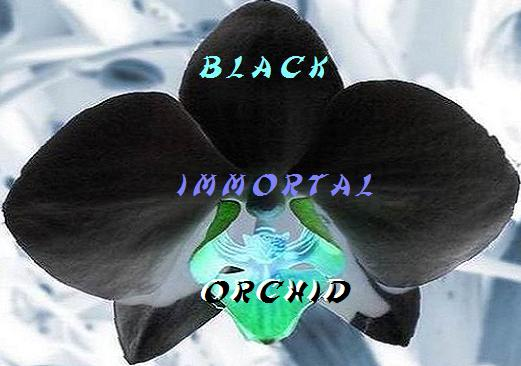 Black Immortal Orchid