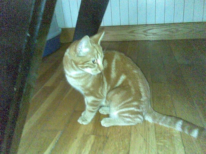 Paprika 6 mois, rousse Photo_11