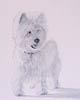 Forum des chiens Westie10
