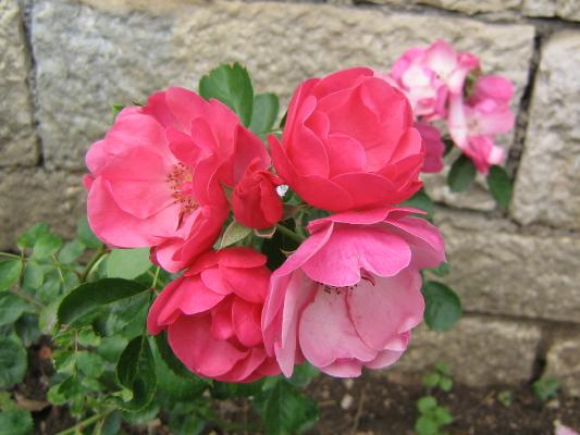 La première floraison Img_1810