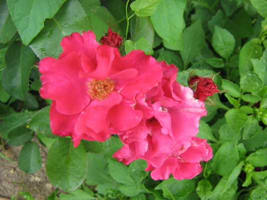 La première floraison Img_1911
