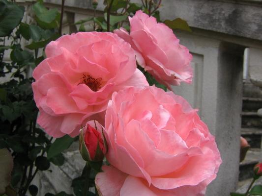 La première floraison Img_1914