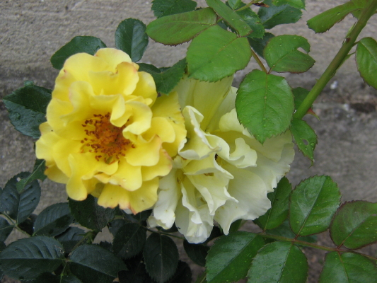 La première floraison Img_1915