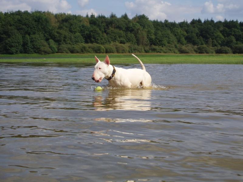 photos de Vordane des Terres d'ilex - Page 2 Lac_du24