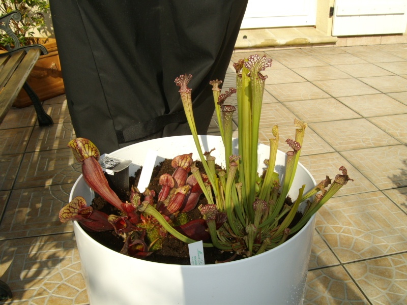 plante de lorenzo Imgp0217