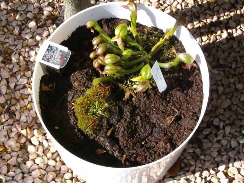 plante de lorenzo Imgp0229