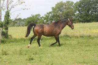 OPEN - SFA né en 2002 - Adopté en août 2009 par Moumouche35  - Page 2 43373810