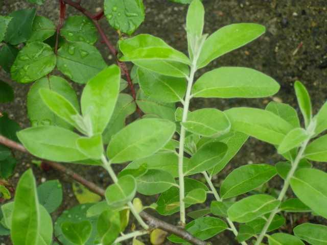 Arbuste de Nounou! 26042019