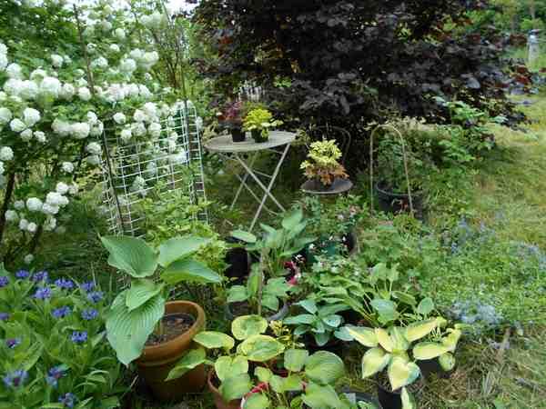 Concours 'Une vue printanière de votre jardin' !!! Concou10