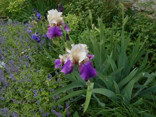 Concours 'Une vue printanière de votre jardin' !!! Concou11