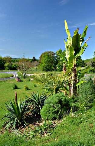Concours 'Une vue printanière de votre jardin' !!! Dsc_4811