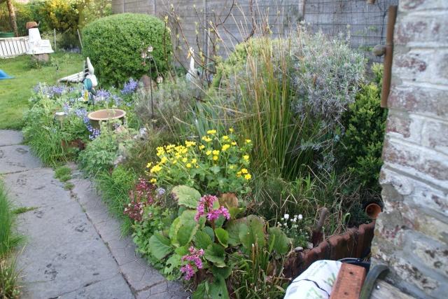 Concours 'Une vue printanière de votre jardin' !!! Img12m10