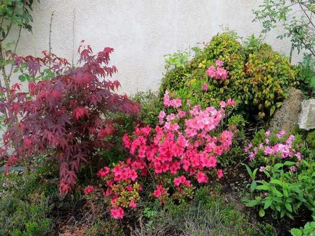 Concours 'Une vue printanière de votre jardin' !!! Img_3110