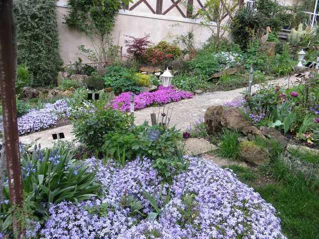 Concours 'Une vue printanière de votre jardin' !!! - Page 2 Imgf_310
